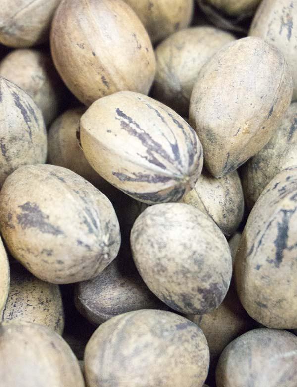 Купить орех пекан в скорлупе